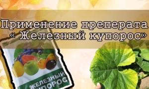 Как обработать клубнику медным купоросом