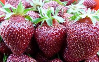 Клубника Рубиновый кулон: описание сорта, выращивание и уход
