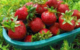 Сорт клубники Лакомка — вкуснейшая крупноплодная ягода!