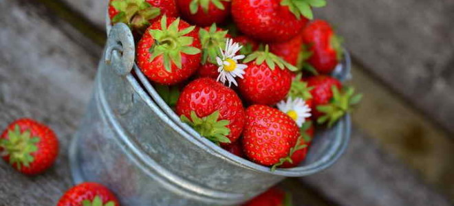 Земляника Заря – неремонтантная советская разновидность с высокой отдачей плодов отменного вкусового качества