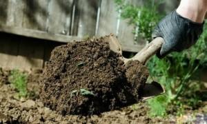 Как подготовить почву под посадку клубники