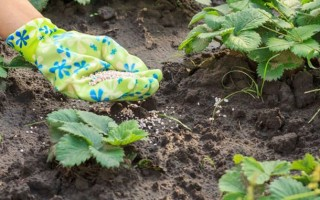 Как подкормить клубнику мочевиной весной и осенью