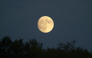 Благоприятные дни для посадки клубники по лунному календарю в 2020 году