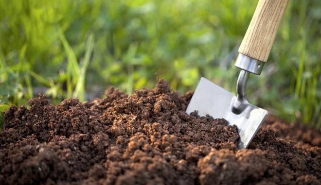 Подготовка грунта под клубнику