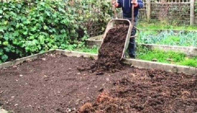 Подготовка земли под клубнику