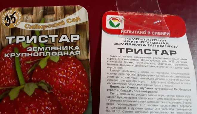 Семена клубники Тристар